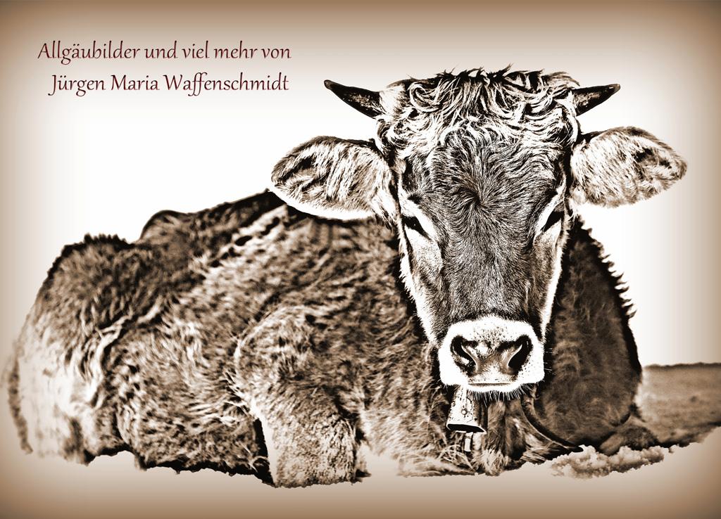 Juergen M. Waffenschmidt